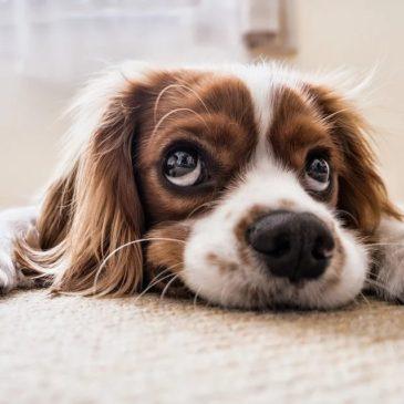 Puis-je donner de la spiruline à mon animal de compagnie ?