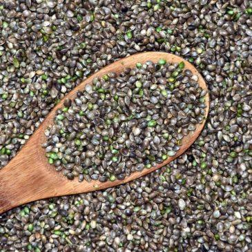Alimentation équilibrée : les graines de cannabis !